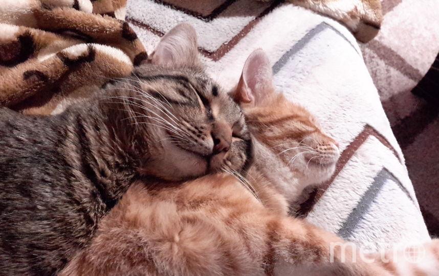 Это наша сладкая парочка. Кот Тёмыч и рыжая красотка Кнопка. Фото Борис