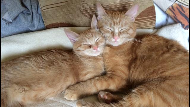 Котики. Фото Ирина