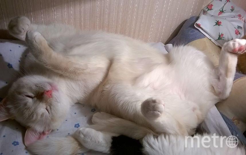 Котик Ларс. Фото Юлия