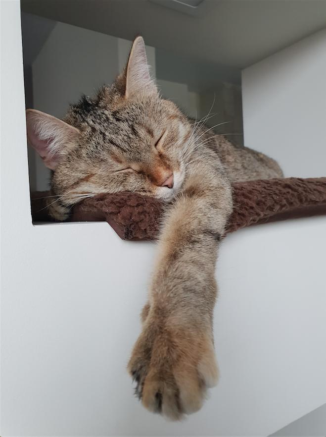 Кошечка Тапа, можно Тапочка, Тапуша, Тапетта! Та еще соня, особенно в кресле-мешке хозяев. Фото Маргарита