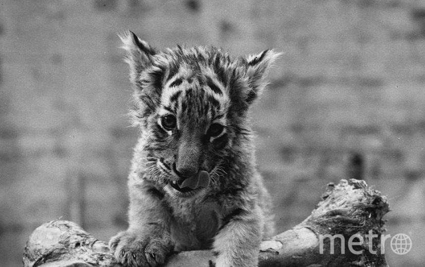 Неизвестно, кормит ли кто-то брошенных зверей. Фото Getty