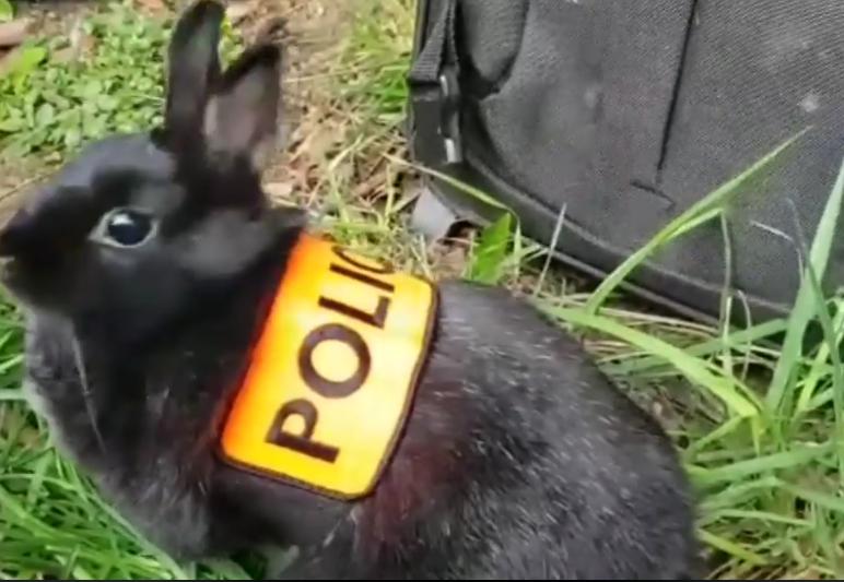 Милого кролика зовут Маринетт. Фото Скриншот facebook.com/PoliceNationale/videos/268828667393669/