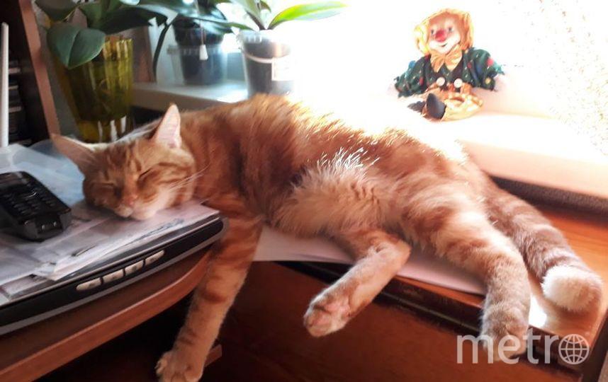 """Кот Джоник. Когда проснусь, тогда и воспользуетесь своим сканером. Мяу. Фото Катерина, """"Metro"""""""