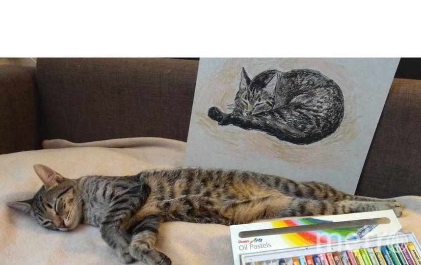 """Кошка - Кира. """"уснула за рисованием автопортрета)"""". Фото Анастасия, """"Metro"""""""