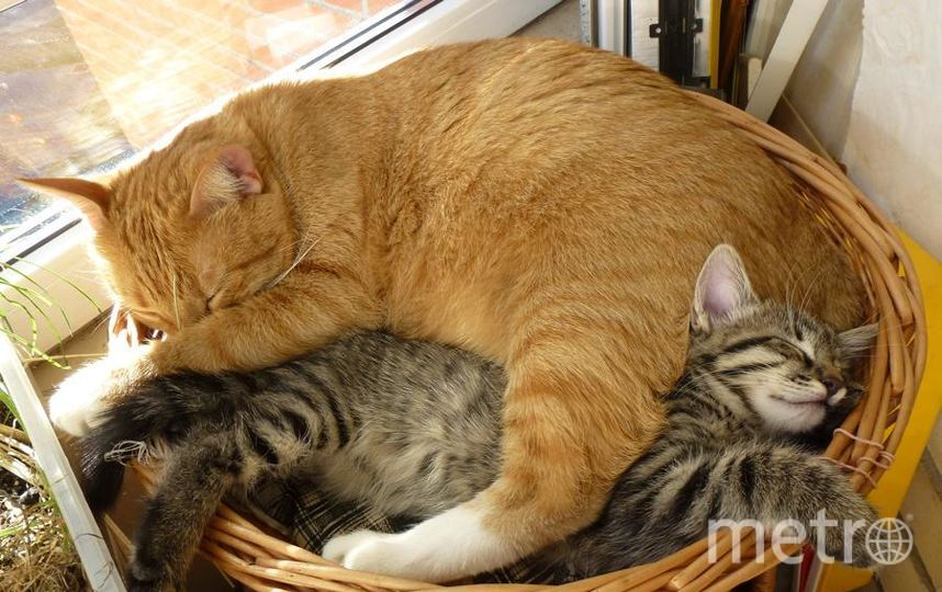 "Это Мася и Сёма. Фото ""кошки в лукошке"". Фото Инна Колосова, ""Metro"""