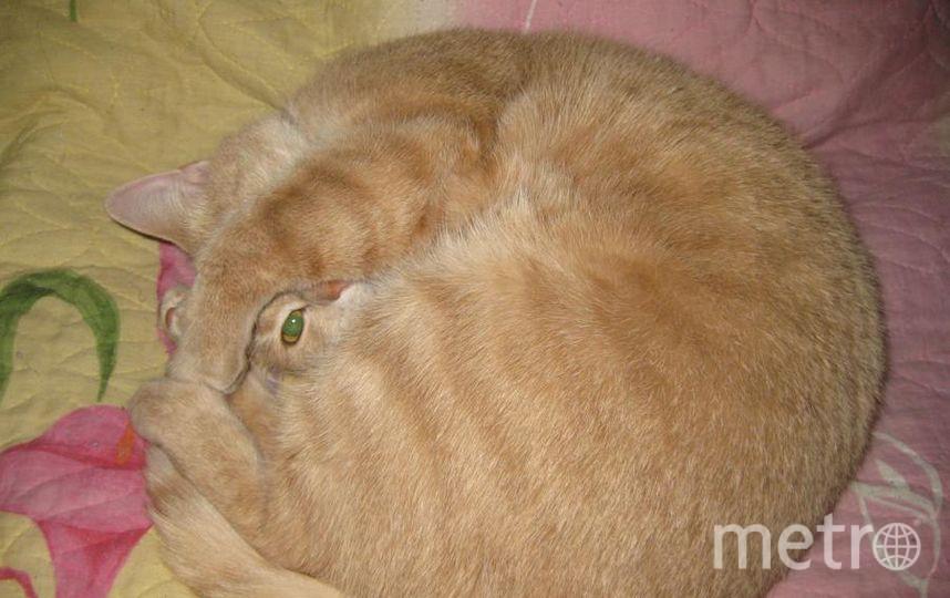 "нашего котика зовут Элвис. Фото Еремеева Мария, ""Metro"""
