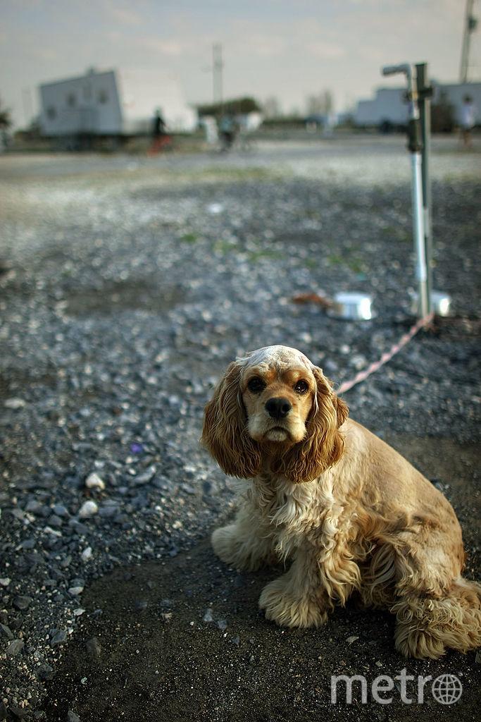Животные. Фото Getty