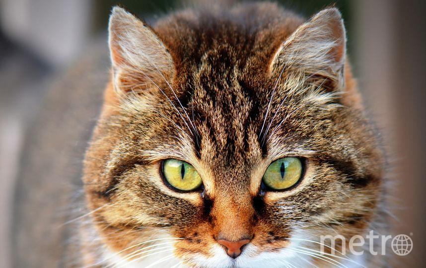 Аллергию на кошек можно победить. Фото https://pixabay.com/