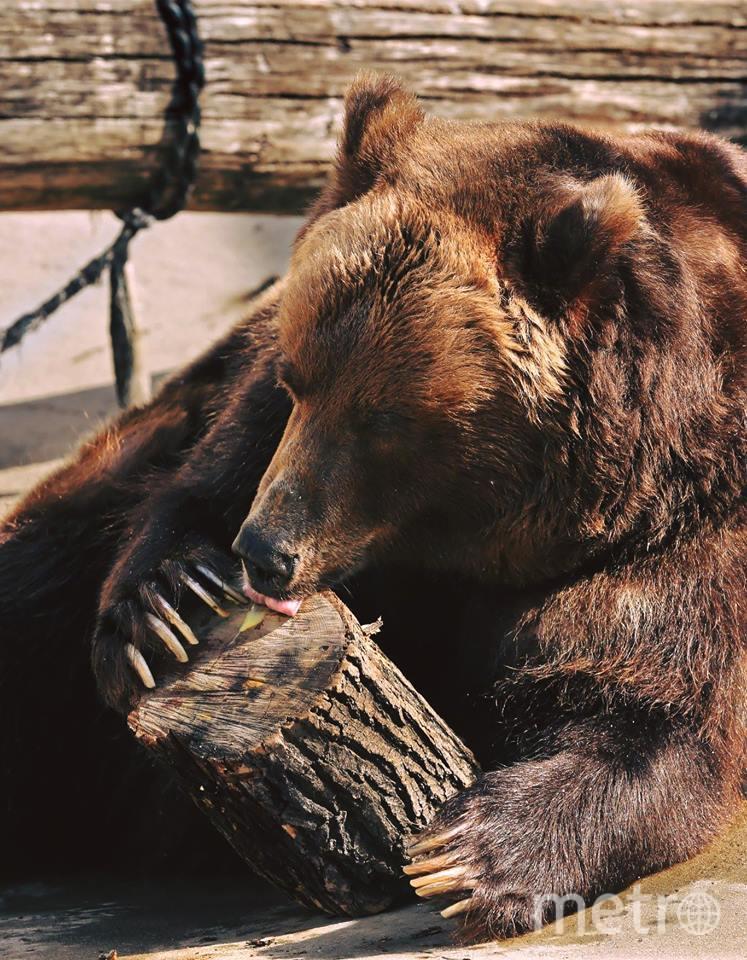 Медведи чувствуют себя хорошо, но все еще кажутся сонными. Фото facebook.com/MoscowZoo