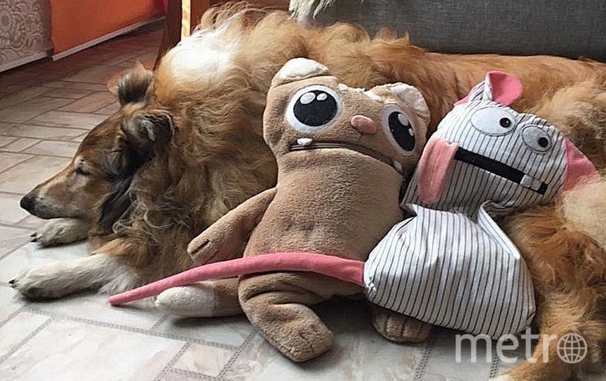 Игрушки Татьяны. Фото Скриншот Instagram/zipperpets