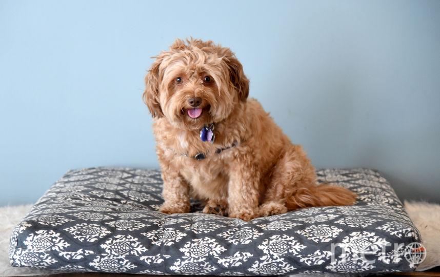 """По мнению главы РКФ, начинающие владельцы собак должны сдавать """"технический минимум"""". Фото Getty"""