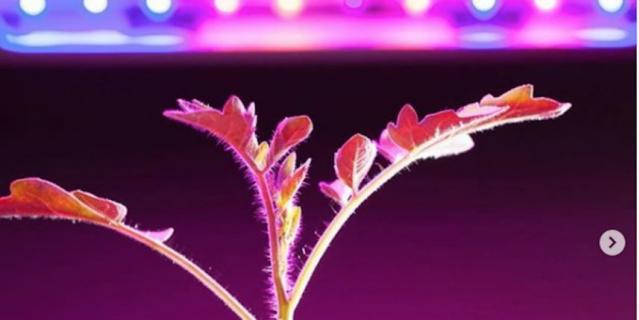 Kristianna_v помогает рассаде расти при помощи фотолампы.