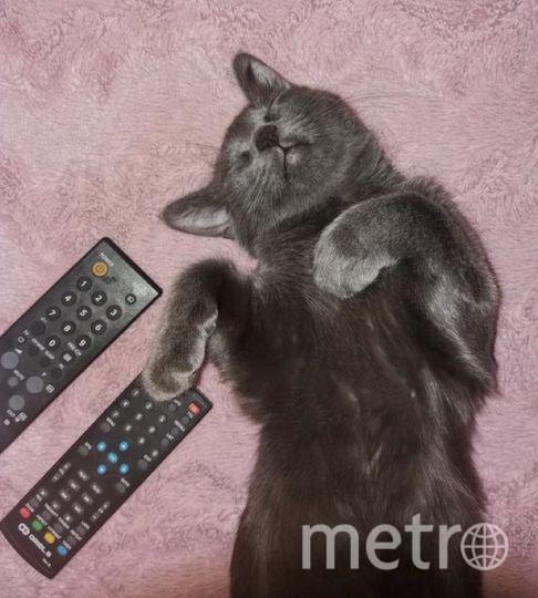 """Это Стеша. У неё был насыщенный день, и она задремала в процессе просмотра телевизора. Фото Ямалова Яна Кошка Стеша, """"Metro"""""""