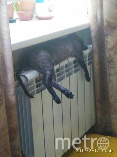 """Светлана, Кошка Матильда. Фото """"Metro"""""""