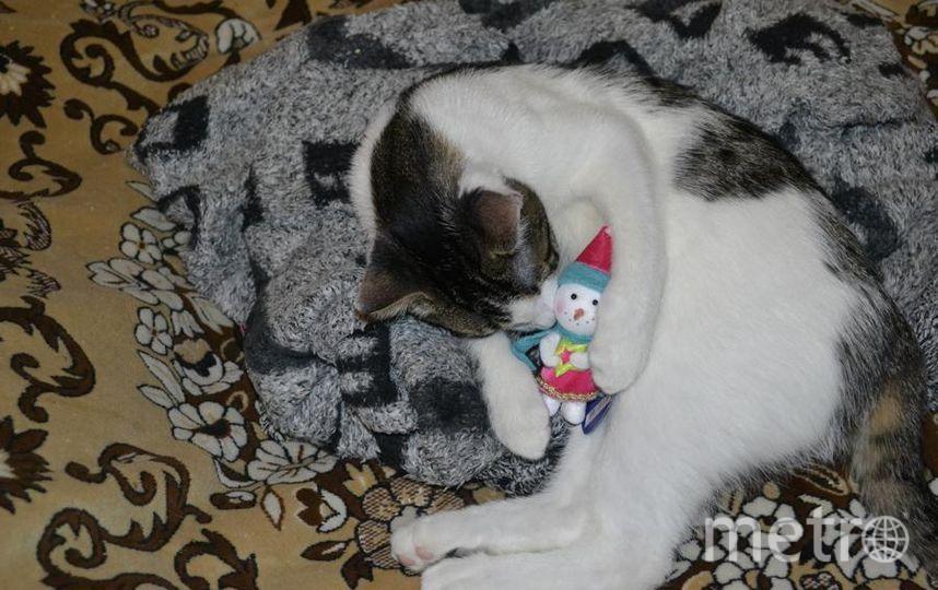 """кот Валера с любимой игрушкой. Фото Серафим Барболин, """"Metro"""""""