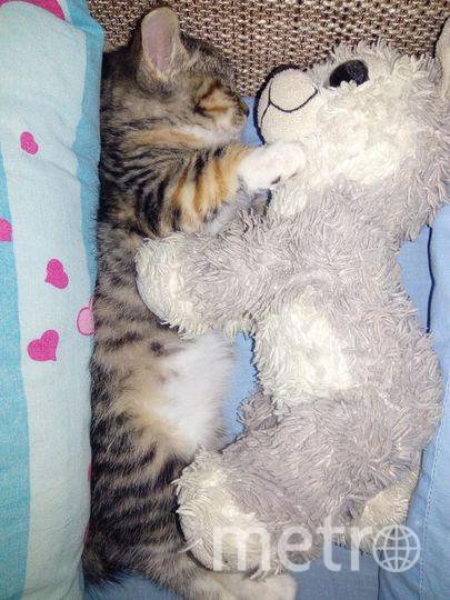 """Это наша, ещё совсем маленькая кошечка Симка. Фото Марина, """"Metro"""""""