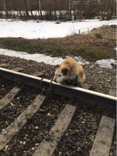 Спасенный пес Серега. Фото club175336494