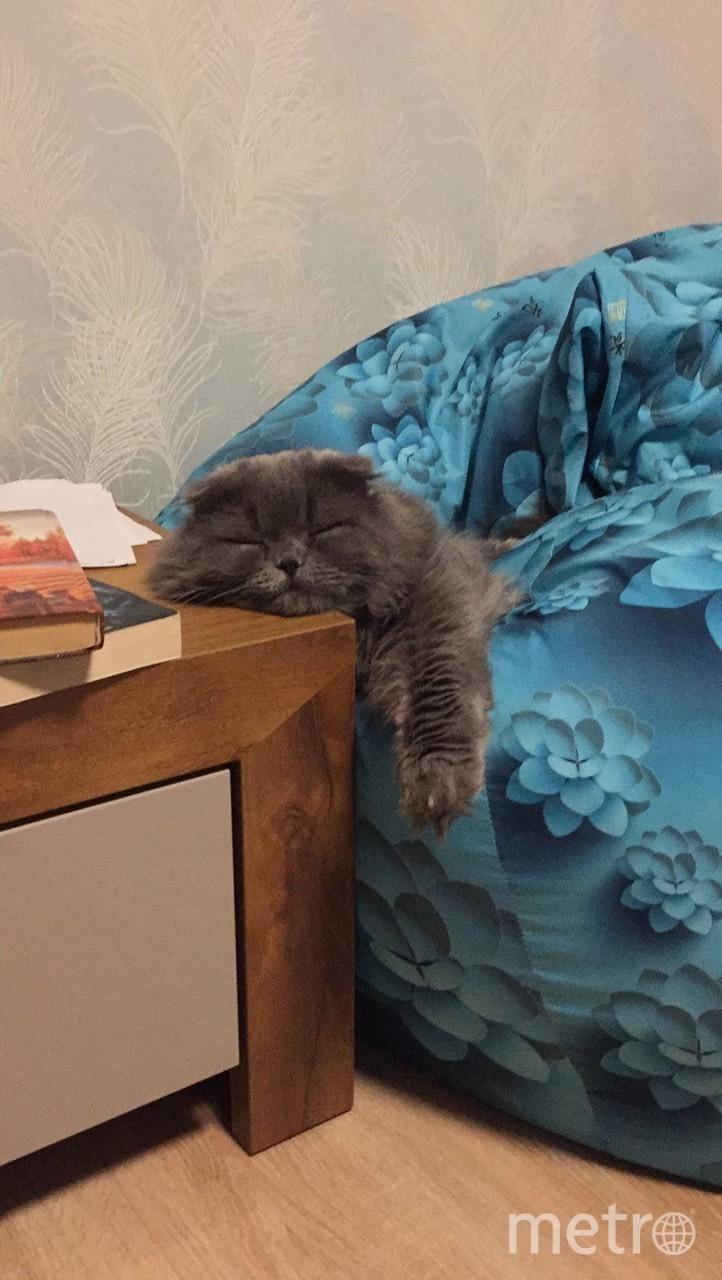 Кот Патрик. Фото Виктор