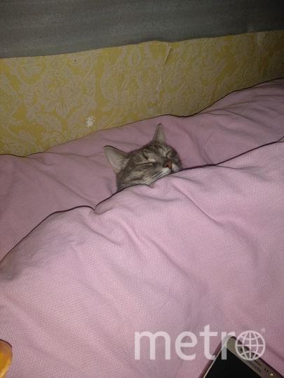 Кошка Мася. Фото Юрий