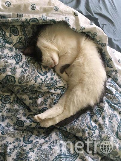 Кошка Муся. Фото Людмила