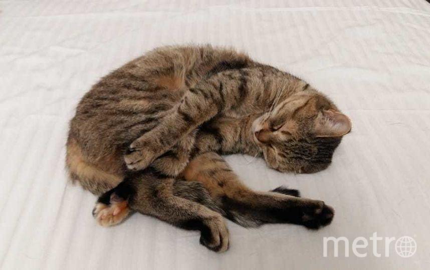 Кошечку зовут Масяня. Возраст кошки-12 лет. Фото Ирина и Константин