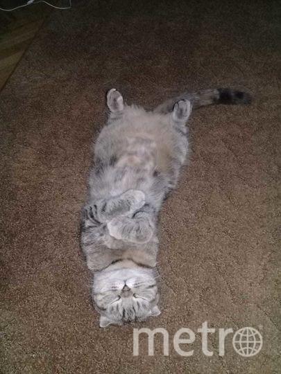 Нашу любимицу кошечку, зовут Кейси! Вот так она любит спать. Фото Олеся