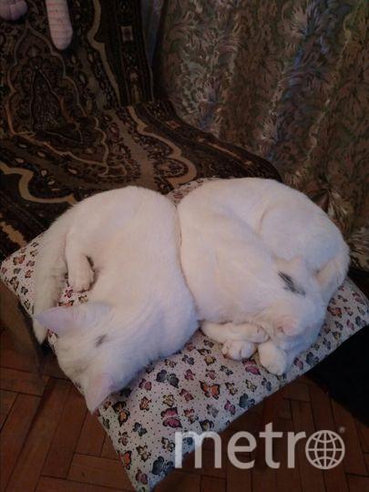 На фотографиях мама Фрейя и её дочка Пяша. Фото Галина