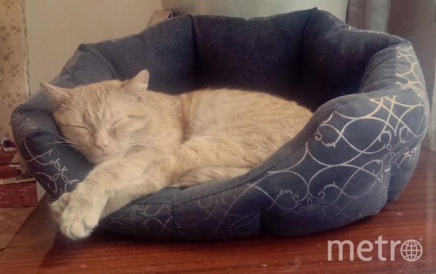 Высылаю Вам фото кота, который живёт у моего дяди Николая в Сибири, в Омской области, Центрально-Любинский с\з. Этому котику очень повезло, так как ещё котёнком дядя подобрал его на улице. Зовут любимца Марсик, потому что он рыжий как планета Марс. Дядя его с удовольствием воспитывает и по моей просьбе сделал несколько фото спящего Марсика для конкурса. Фото Анна