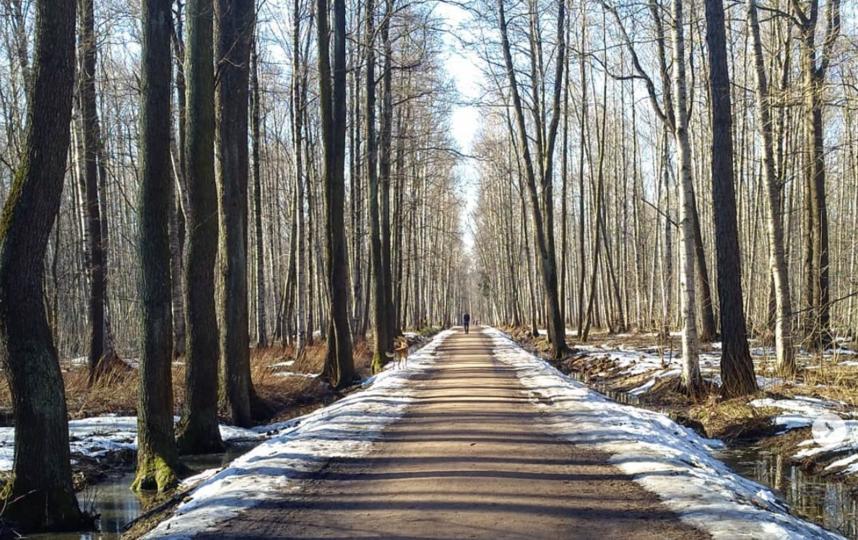 Удельный парк в Петербурге. Фото скриншот https://www.instagram.com/p/Bv6FEImAA5X/
