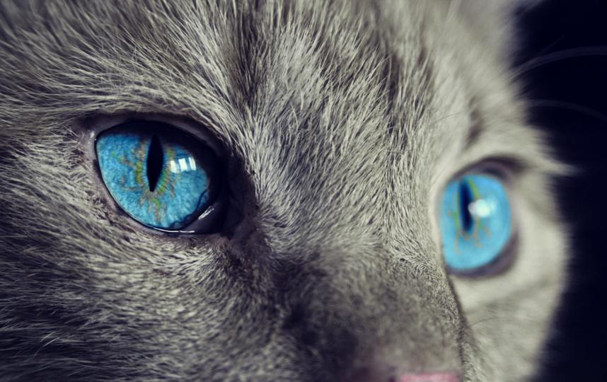 В эксперименте приняли участие 78 кошек. Фото pixabay.com