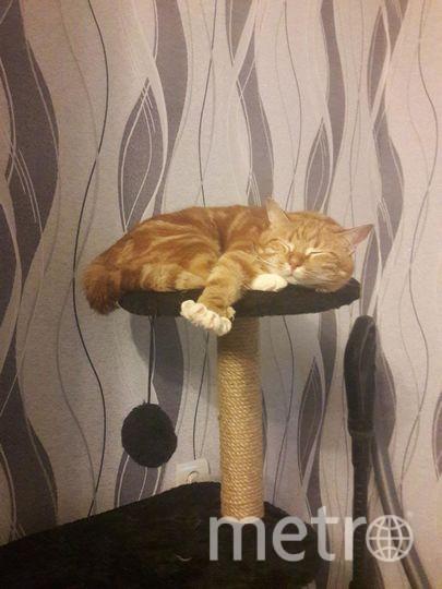 """Кузя, любитель поспать. Фото Cвета Русова, """"Metro"""""""