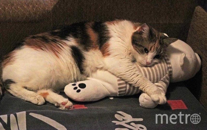 """Кошка Фрося очень любит спать со своей любимой мягкой игрушкой - белым мишкой. Фото Коробова Ирина Юрьевна, """"Metro"""""""