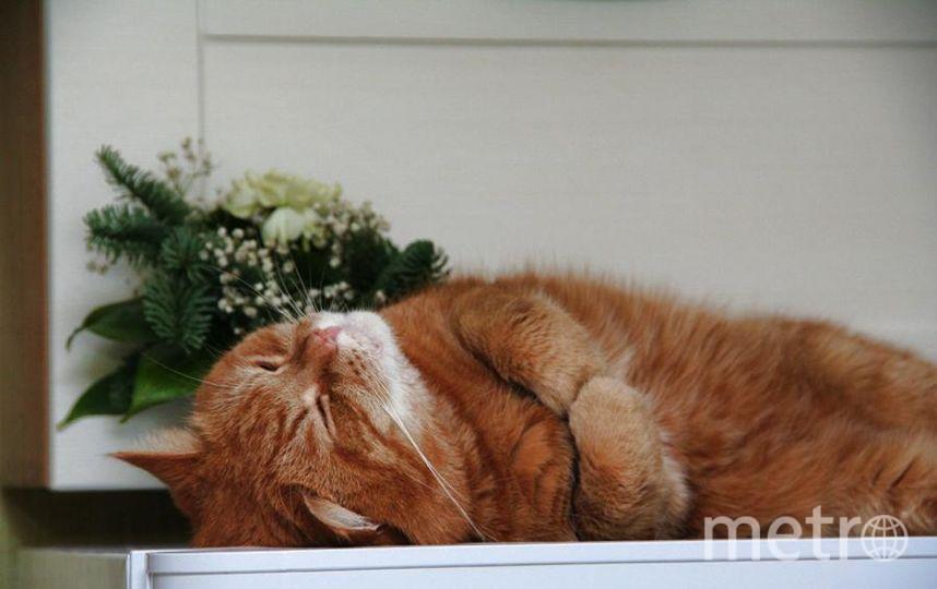"""Кличка кота: Рыжик. Фото Евгений Галаев, """"Metro"""""""