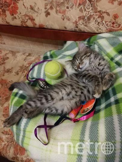 "Кошка Бусинка среди своего богатства. Фото Хозяйка Светлана, ""Metro"""