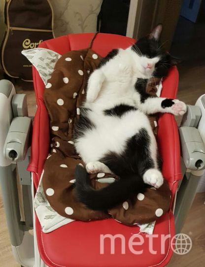 """Наш любимый котик по кличке Кряк. Почему бы не воспользоваться детским креслом, пока никто не видит). Юлия Пермякова.. Фото """"Metro"""""""