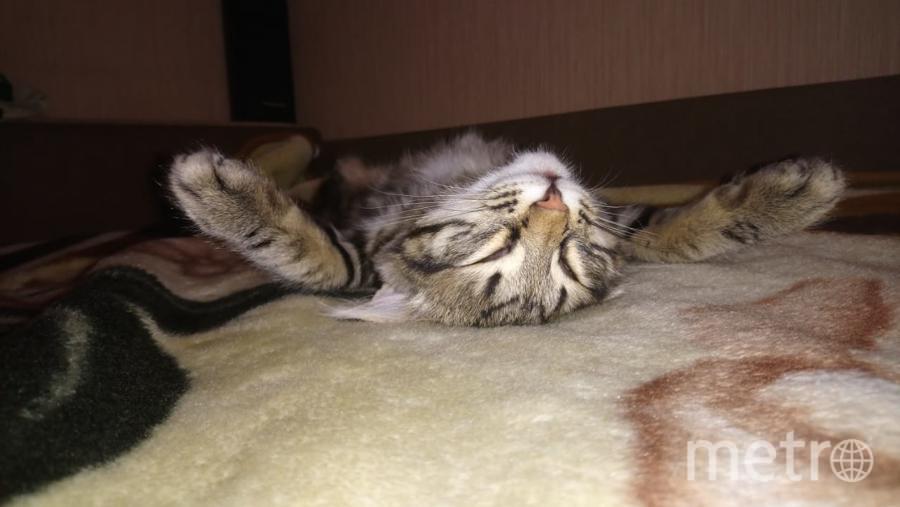 """Наш любимец Эсик. Очень любит спать. Фото Анастасия, """"Metro"""""""