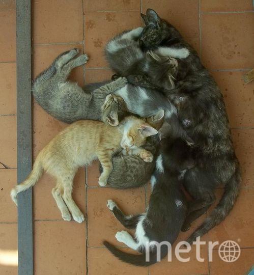 "Кличка кошки Трехцветка, рыжего котика себе оставили Рыжман. Фото Роман., ""Metro"""