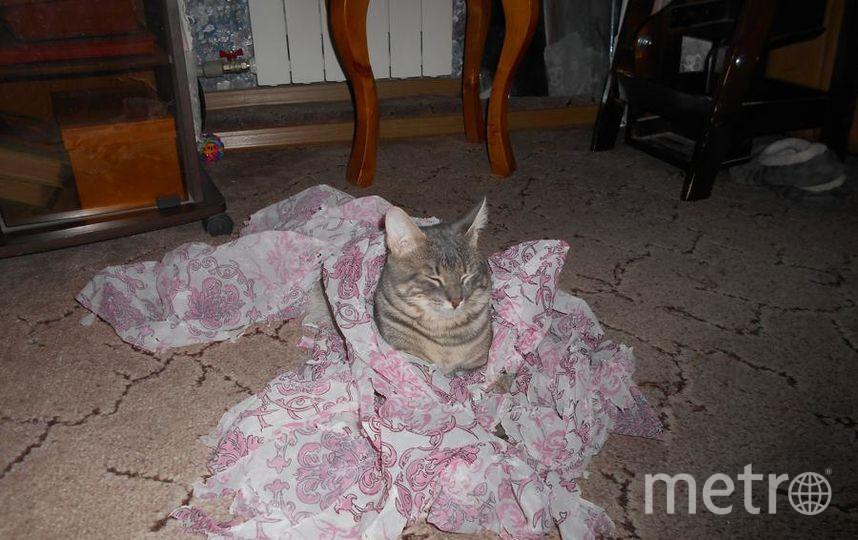 """Кот Тёма. Был взят из приюта. Ему нет еще и года, но он уже забыл про сиротское детство. Теперь ему снятся только сладкие сны. Фото Ирина, """"Metro"""""""