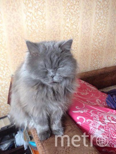 """Меня зовут Валерия, ваш постоянный читатель на протяжении 4-х лет. На фото наша персидская кошка Николь, которая умеет спать сидя, лёжа, а также имеет собственную кроватку.. Фото """"Metro"""""""