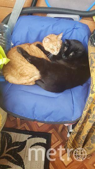 """Рыжик и Ёшка обрели дом, теперь не приходится скитаться, испытывая голод и холод. Фото Анна Тимонина, """"Metro"""""""