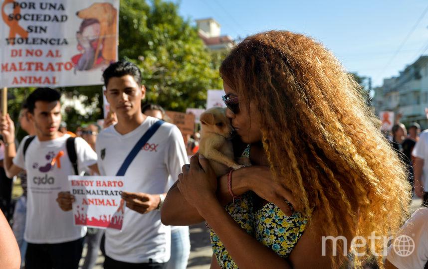 Участники шествия вышли на улицы Гаваны вместе с домашними питомцами. Фото AFP