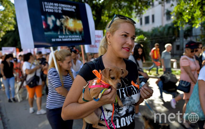 В акции участвовало около 400 зоозащитников. Фото AFP