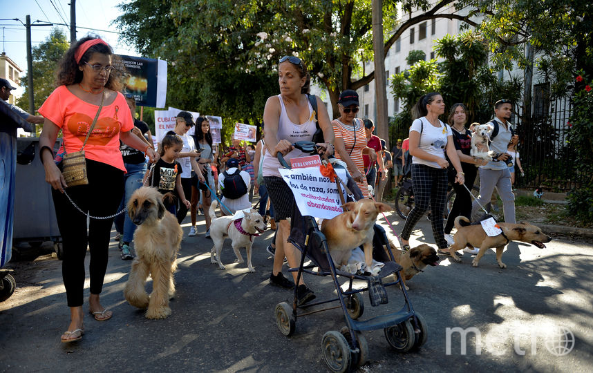 В акции участвовало около 400 зоозащитников.В акции участвовало около 400 зоозащитников. Фото AFP