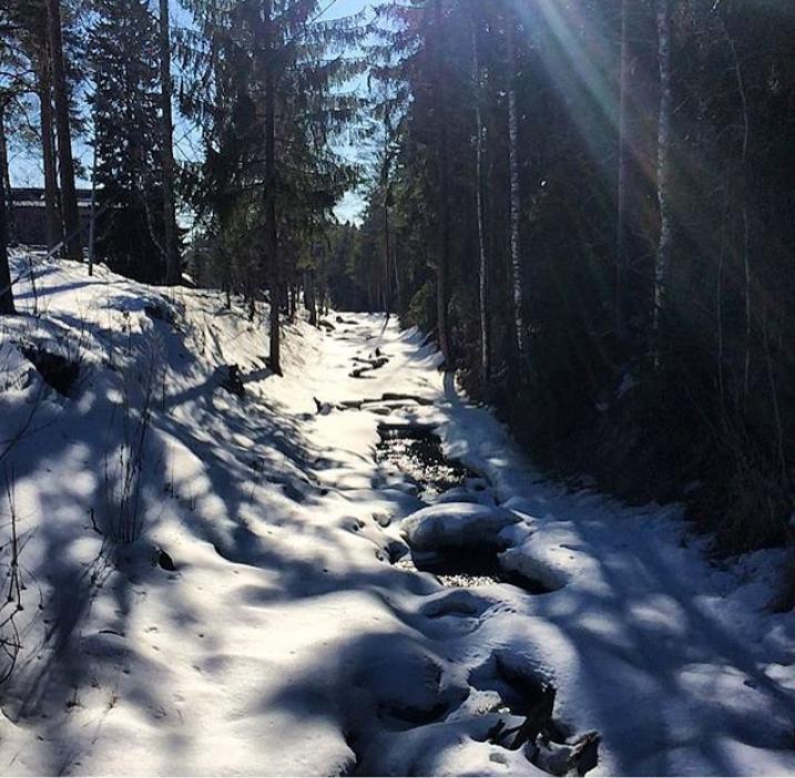 Выборг завалило снегом: Instagram пополнился холодными фото. Фото Скриншот Instagram: @maroussia_k