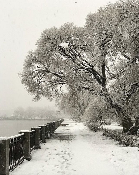 Выборг завалило снегом: Instagram пополнился холодными фото. Фото Скриншот Instagram: @elenaleonardovna