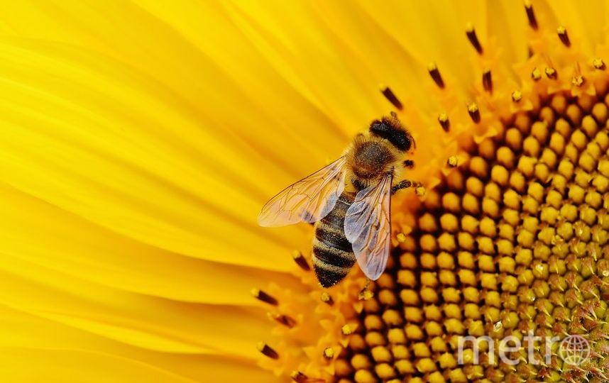 Врачи больницы на Тайване обнаружили в глазу 28-летней пациентки четырёх пчёл. Фото pixabay.com