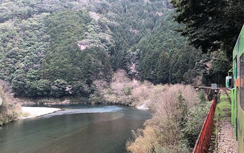 Пассажиры смогут насладиться видом реки и лесом, а также сделать фотографии. Фото Скриншот https://www.instagram.com/aki_na.aki_na/