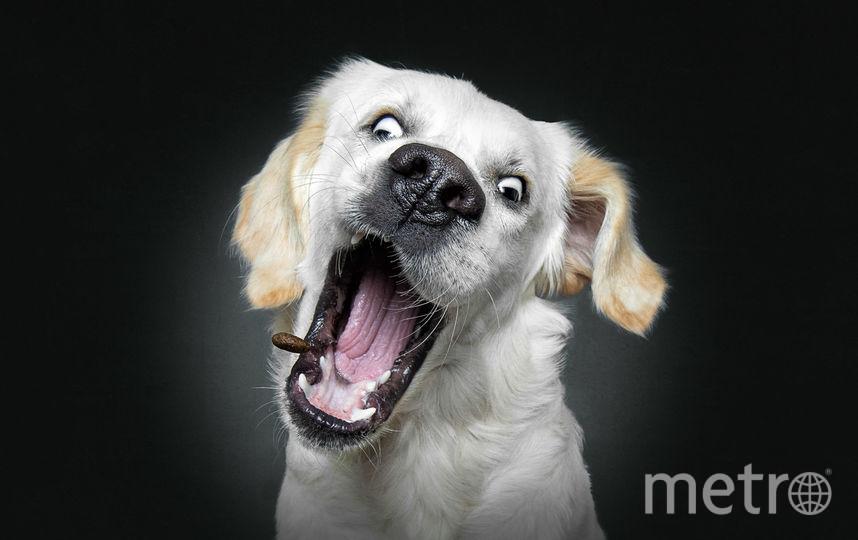 Собака ловит еду. Фото Instagram/vieler.photography