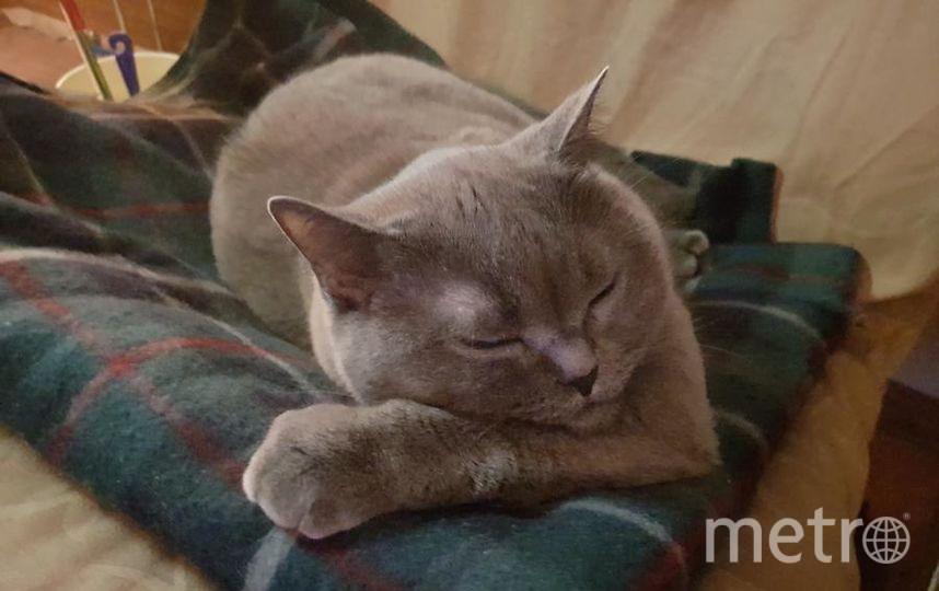 """Наша красавица Шеба! Очень милая, добрая, благодарная кошечка, удочерённая из приюта. Фото Михайлова Лада, """"Metro"""""""