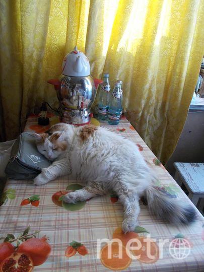 """СПИТ кошка Муся. Нина. Фото """"Metro"""""""